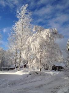Vintersörskog liten
